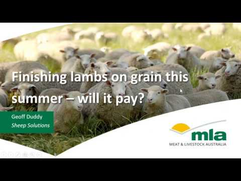 Finishing lambs on grain this summer: will it pay? | Sheep Productivity and Profitability webinar