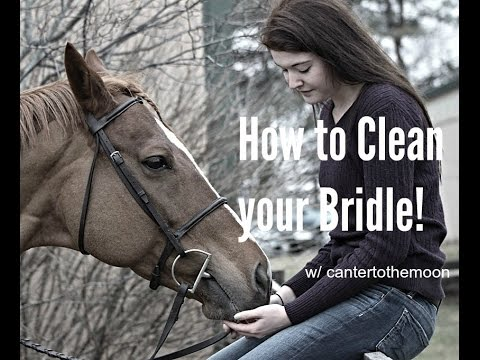 how to clean a bridle
