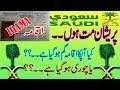 Saudi Iqama Lost Urdu Hindi Guide | Saudi Iqama Gum Ho jay to Kya Kareyn|
