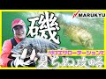 濁りと粒で回遊する黒鯛を完全奪取 石村仁インストラクターの磯チヌ戦術
