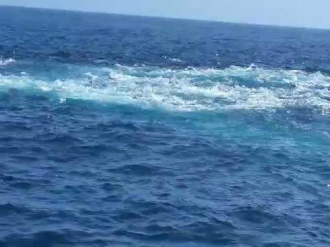 976 Tuna Charter