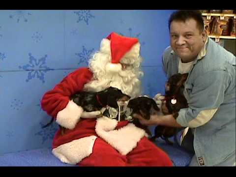 Crazy Dachshund Santa Bloopers 1