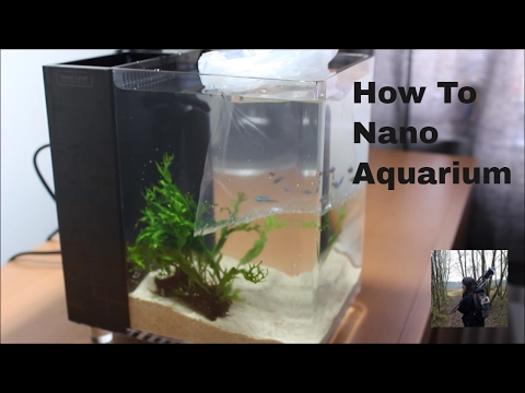 how to set up a nano fish tank (office aquarium)