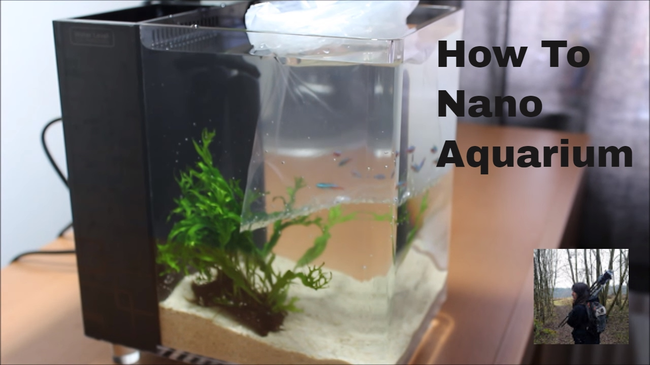 how to set up a nano fish tank (office aquarium) - YouTube