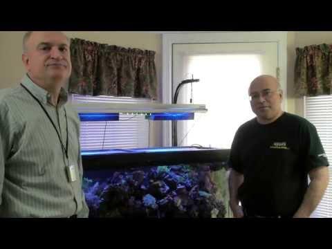 Part III - Paletta LED Experimental - Reef Video Podcast By AmericanReef - Start Saltwater Aquarium