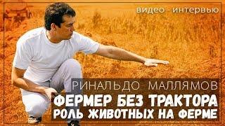 Успешный фермер без трактора. Истинная роль животных на ферме.