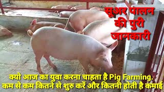 How to Start pig farming in India in Hindi, complete knowledge, PIG FARM IN HARYANA