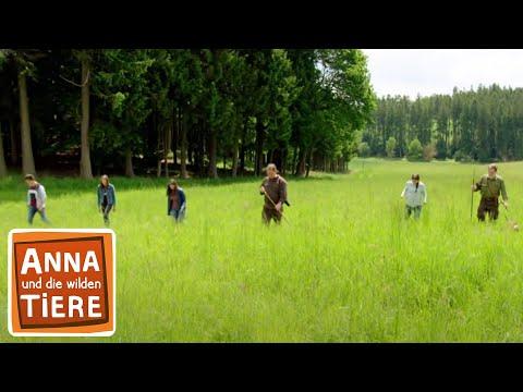 Rettung Auf Dem Feld Doku Reportage Fur Kinder Anna Und Die Wilden Tiere Youtube
