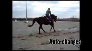 Louisville, Kentucky Thoroughbred Gelding Horse For Sale