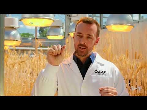 'Speed Breeding' In Australia Boosts Future Crop Possibilities