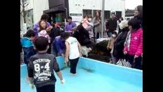 きらきらフェスティバル2012 清流荒川さけの掴みどり