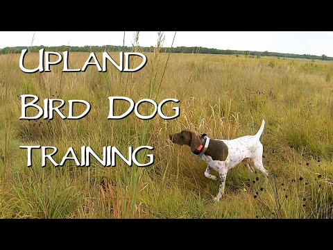 Bird Hunting Dogs In Training - Episode 1