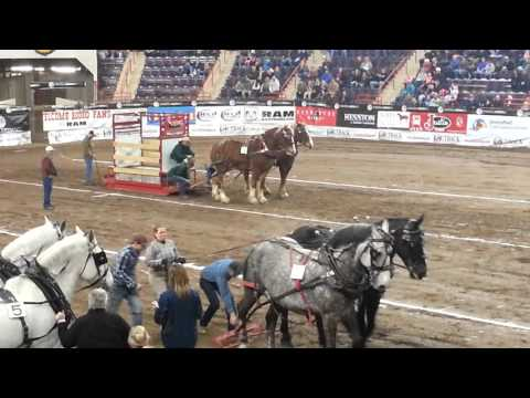 Pennsylvania Farm Show 2016 Working Horse Team Sled Pulling