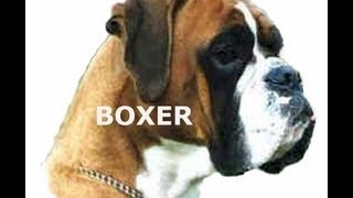 BOXER  [Training and Care]