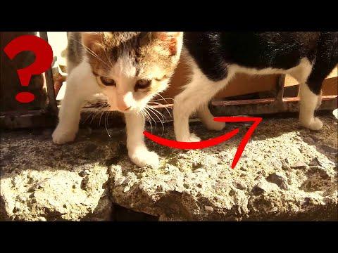 I feeding stray cats (Cute kittens- cat food)