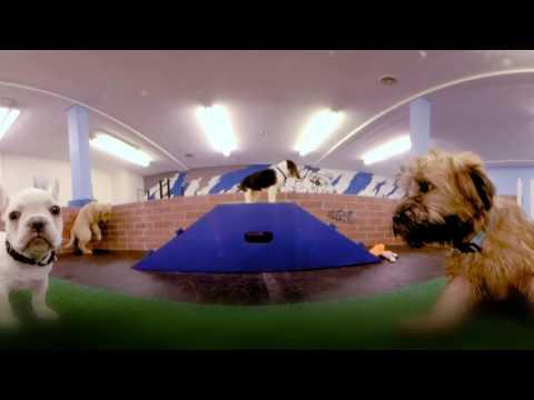 #AllForSmallBiz 360: BlueCollar Working Dog | Google