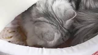 따뜻한 겨울용 라면 고양이이불 침낭 강아지침대 사계절 …