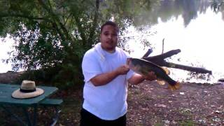 Big bass on senko wacky style el dorado park lake