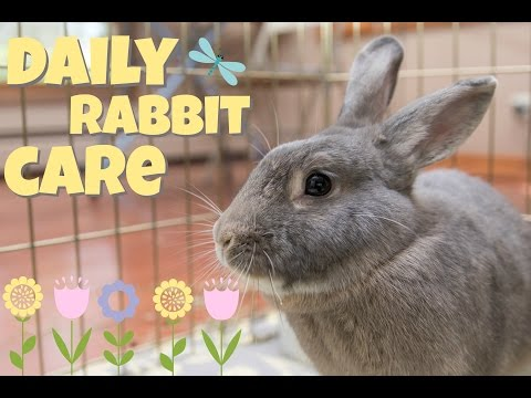 DAILY RABBIT CARE 🌻