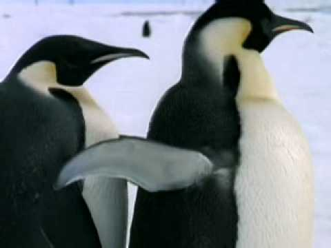 Animals in Extremes (Discovery Channel)