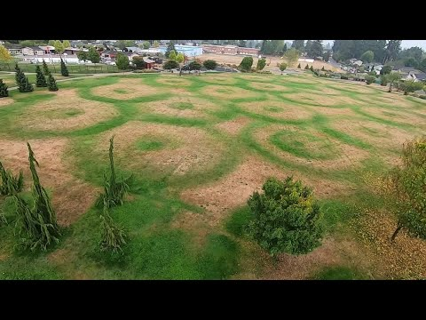 Those Crop Circles At A Tacoma Park? There's A Terrestrial Cause