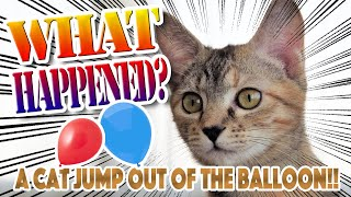 A Cat Jump Out Of The Balloon  ニャンコ風船から登場!【amazing】【スーパージャンプ】