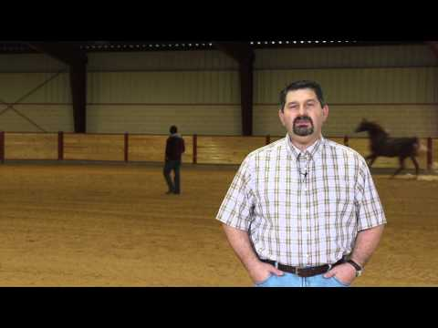 tranquility-supplement-for-horses-by-mark-depaolo,-dvm