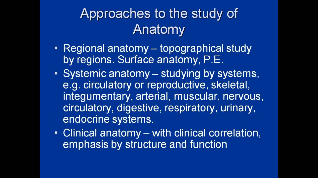 Human Anatomy Quick Review Youtube