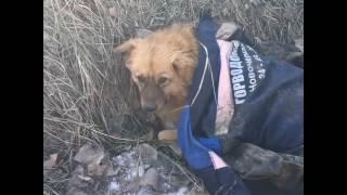 Спасение сбитого пса в Новочеркасске