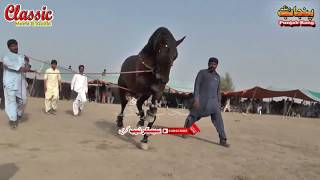 78/Best Horse Dance Punjab Meerik Sial Jhang 2018/ Bani Syed Qalandar Sultan