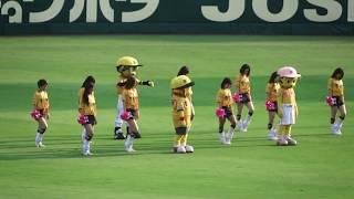 タイガースガール・チアダンス 阪神甲子園球場2018/7/17.
