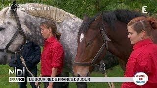 ANIMAUX : Dans l'Orne, les chevaux de trait font le show