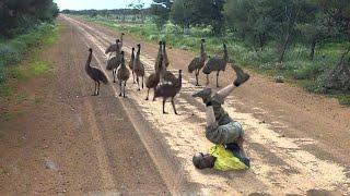 اكتشف كيف يقوم هذا الرجل بخداع تلك الطيور