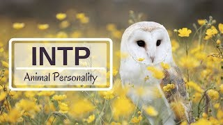 INTP Animal Personality - Myers Briggs Personality Type
