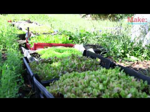Closed Loop Urban Farming: Brother Nature Produce