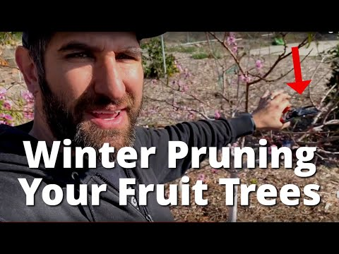 Did I Wait TOO LONG to Winter Prune my Fruit Trees? 😬🌿🌳   Winter Pruning Fruit Trees Examples
