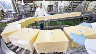 놀랍고 신기한 치즈와 우유 만들어지는 과정 및 제조공장