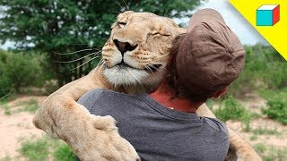 Top 10 Increíbles Animales Que Salvaron Vidas Humanas | TheRandomBox