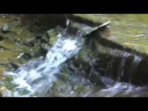Exploring Swayze Falls