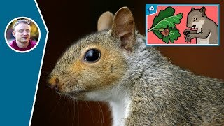 Deep Dive: What is Symbiosis? War between tree and squirrel!