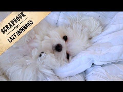 Milo's Lazy Mornings