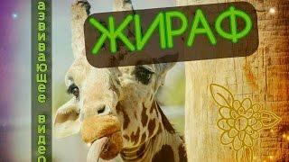 Жираф. Развивающее видео для детей.