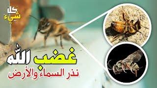 هل نفوق النحل بالعراق غضب إلهي ماحق أم هي مؤامرة كبرى؟ ستذهل من الحقيقة