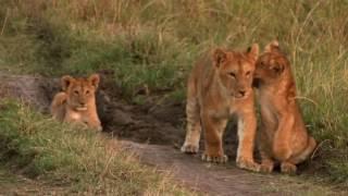 Richard's Camp - Masai Mara, Kenya