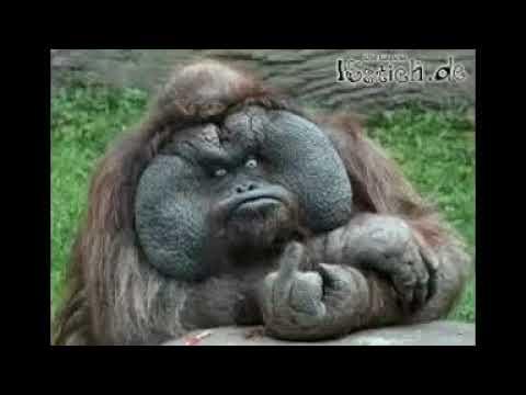 Lustige Affen vidios - YouTube