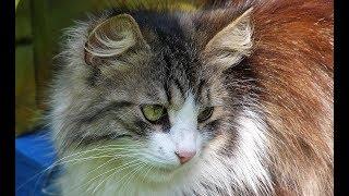 Бросившись в кусты за своей кошкой, мужчина решил, что там плачет котенок, но это был не плачь кота