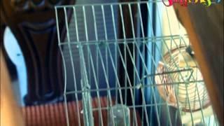 صوم العصافير بدون ايقاع  قناة كراميش الفضائية Karameesh Tv