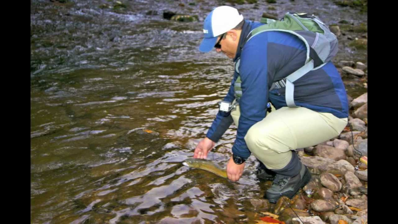 Ecuador fly fishing at west virginia elk springs resort for Elk river wv trout fishing