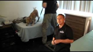Detection Dog Quick Tip, Bedbug, Narcotics, Explosive