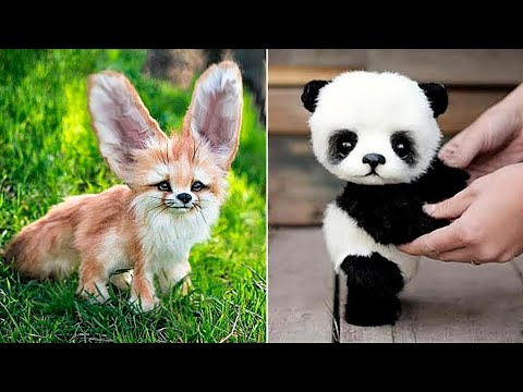 Baby Animals ? Funny Cats and Dogs Videos Compilation (2020) Perros y Gatos Recopilación #57